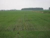 Технология возделывания яровой пшеницы на северо-востоке нечерноземья