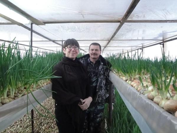 Даровской район: лук зеленый в январе