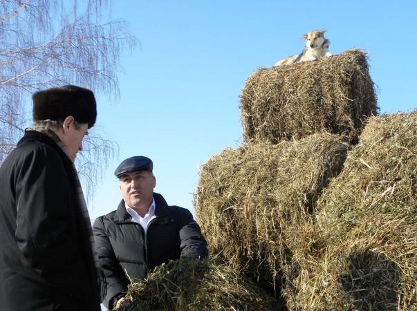 Отличное клеверное сено на корм скоту