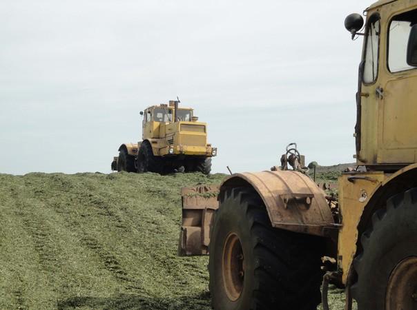План – 72,5 тысячи тонн зеленой массы!