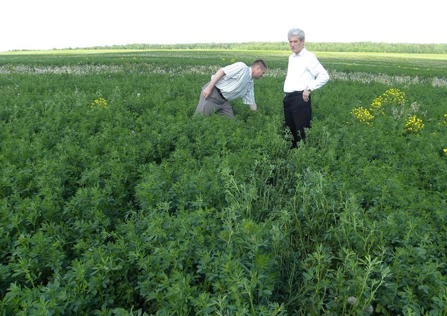 Сегодня и травы требуют высоких технологий