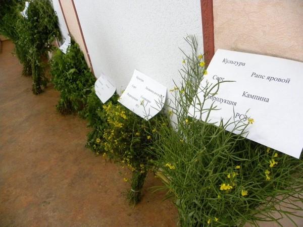 О.а.вязников: заметки агронома