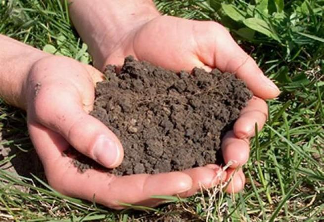 Почвы должны обследоваться