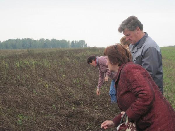 На семенниках клевера в Кирово-Чепецком районе