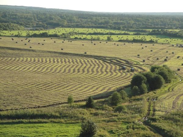 Старовозрастные посевы многолетних трав необходимо обновлять